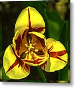 Mirrored Tulip Time Metal Print