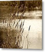 Mirroring Nature Metal Print