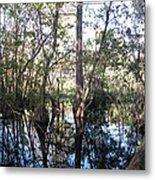 Mirroring The Swamp Metal Print