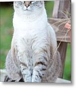 Miss Dutchess Metal Print