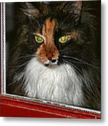 Miss Gizzie Waits By Diana Sainz Metal Print