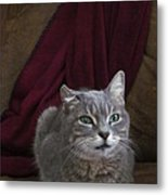 Miss Lucille Metal Print