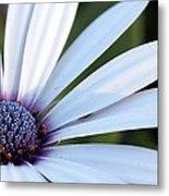 Mission Flower 4480 Metal Print