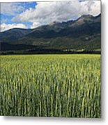 Mission Valley Wheat Metal Print
