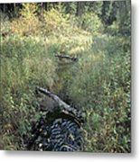 Mississippi River Headwaters Metal Print