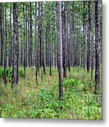 Mississippi Woods Metal Print