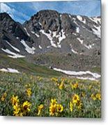 Missouri Mountain And Wildflower Landscape Metal Print
