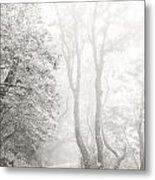 Mist In Madeira Metal Print