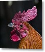 Mister Rooster Metal Print