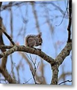 Mister Squirrel Metal Print