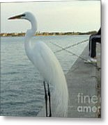 Mister When Are We Going To Have Catch Of The Day Metal Print