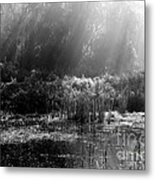 Misty Marsh - Black And White Metal Print