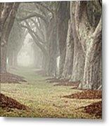 Misty Morning Avenue Of Oaks Metal Print
