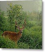 Misty Morning Deer Metal Print
