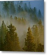 Misty Morning In The Pines Metal Print