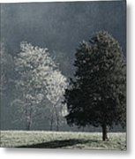 Misty Morning Trees Metal Print