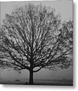 Misty Nature   Metal Print