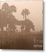 Misty Palmettos Metal Print