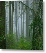 Misty Woodland Metal Print