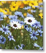 Mixed Daisies Metal Print