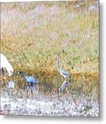 Mixed Shore Birds Metal Print