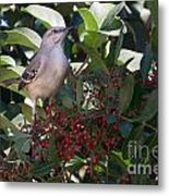 Mocking Bird And Berries Metal Print