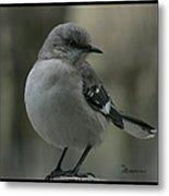 Mocking Bird Cuteness - Featured In Wildlife Group Metal Print