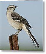Mocking Bird On A Metal Post Metal Print
