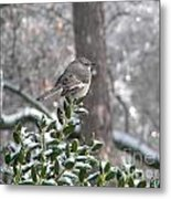 Mockingbird Cold Metal Print