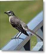 Mockingbird Perched Metal Print