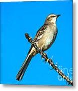 Mockingbird Metal Print by Robert Bales