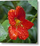 Moist Metal Print by Kenneth Hadlock