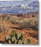 Mojave Desert Cactus Metal Print
