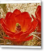 Mojave Mound Cactus Art Poster - California Collection Metal Print
