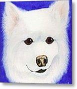 Molly The American Eskimo Dog Metal Print
