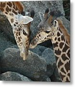 Mom And Baby Giraffe Metal Print