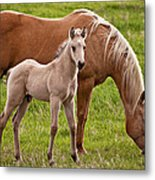 Mom And Foal Metal Print