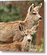 Mom And Junior Metal Print