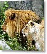 Mom And Pop Lion Metal Print