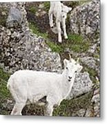 Mom And The Youngster Metal Print