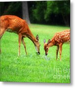 Mom Sharing A Snack With Her Baby Fawn Metal Print
