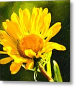 Moment In The Sun - Golden Flower - Northern California Metal Print