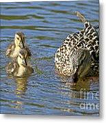 Momma Mallard And Her Ducklings Metal Print