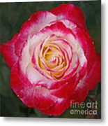 Mom's Red Rose  Metal Print