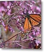 Monarch 1 Metal Print