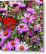 Monarch Among The Asters Metal Print