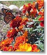 Monarch Among The Marigolds Metal Print