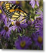 Monarch And Asters Metal Print