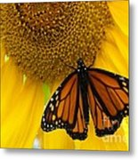 Monarch And Sunflower Metal Print