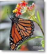 Monarch Metal Print